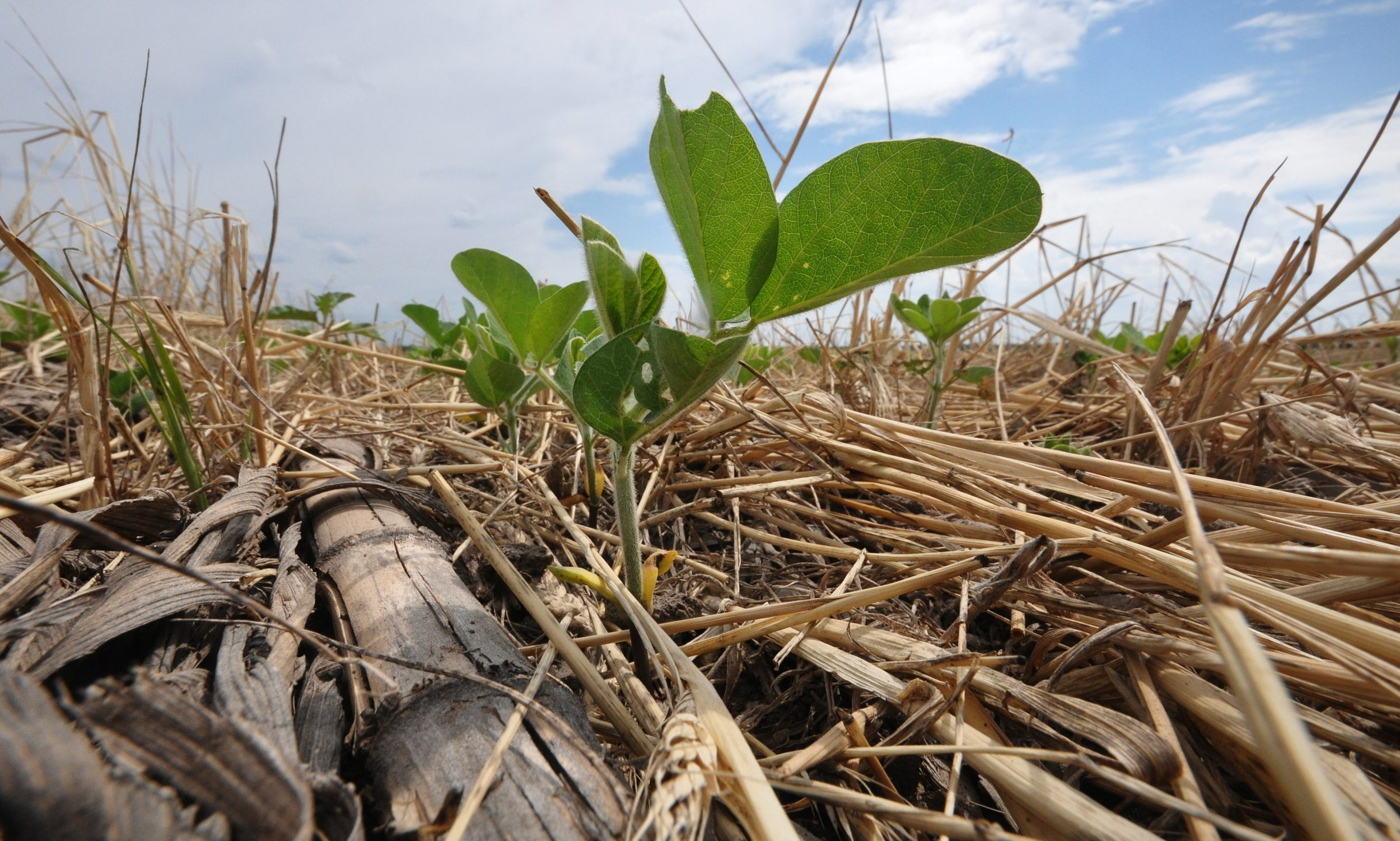 Cover Crops Ahead of Soybeans Step-by-Step Process
