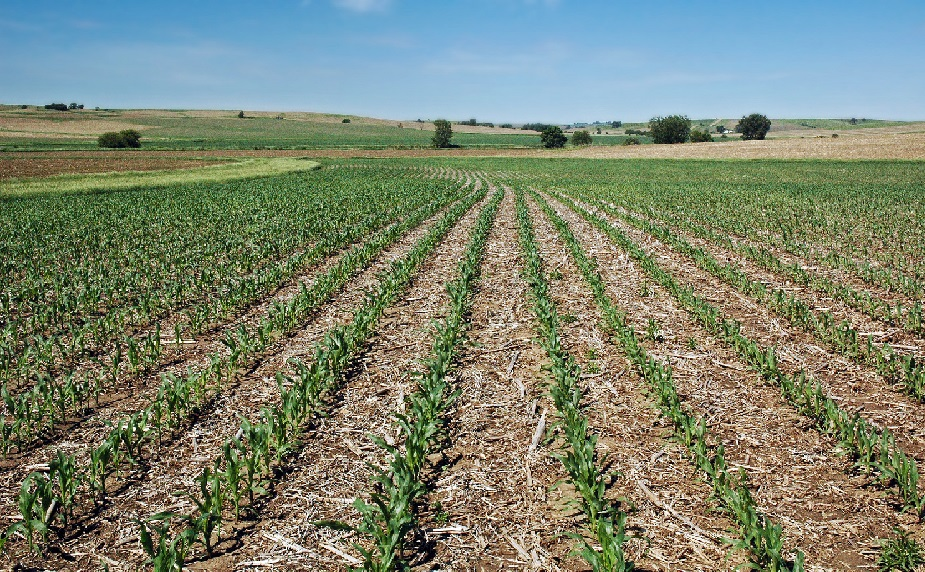 CC Recipe: Corn-Bean No-Till