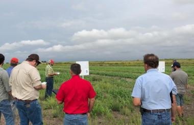 ISAP Seeks Facilitators to Lead Farmer-to-Farmer Peer Networks