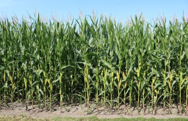 Nutrient loss reduction efforts include outreach, watershed planning